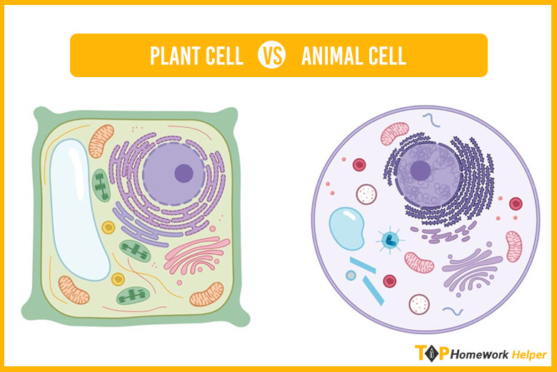 Plant Cells vs Animal Cells